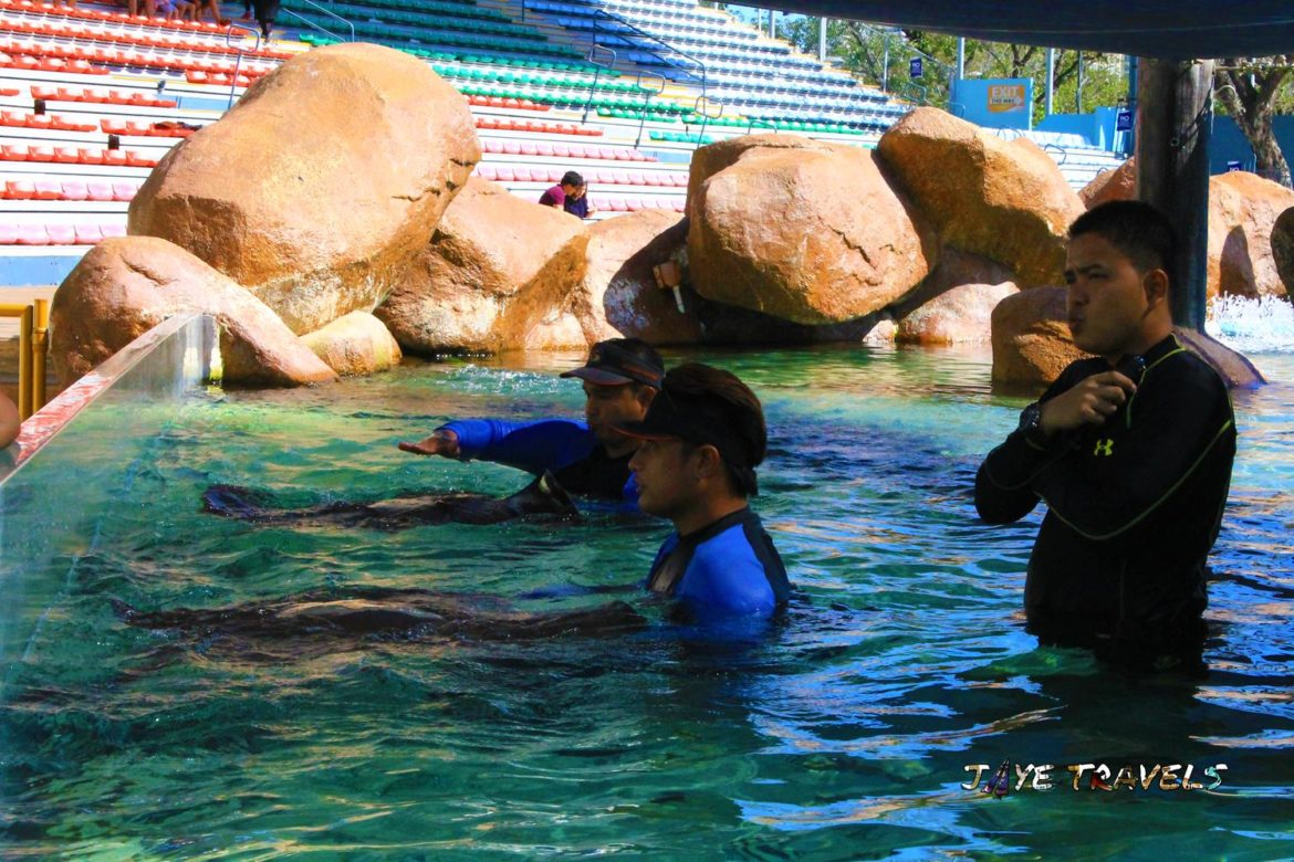 Sting Ray Touch Ocean Park