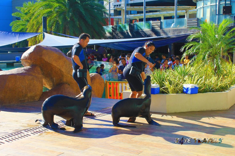 Sea Lion Ocean Park