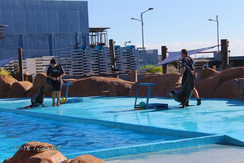 Sea Lion Show Manila Ocean Park