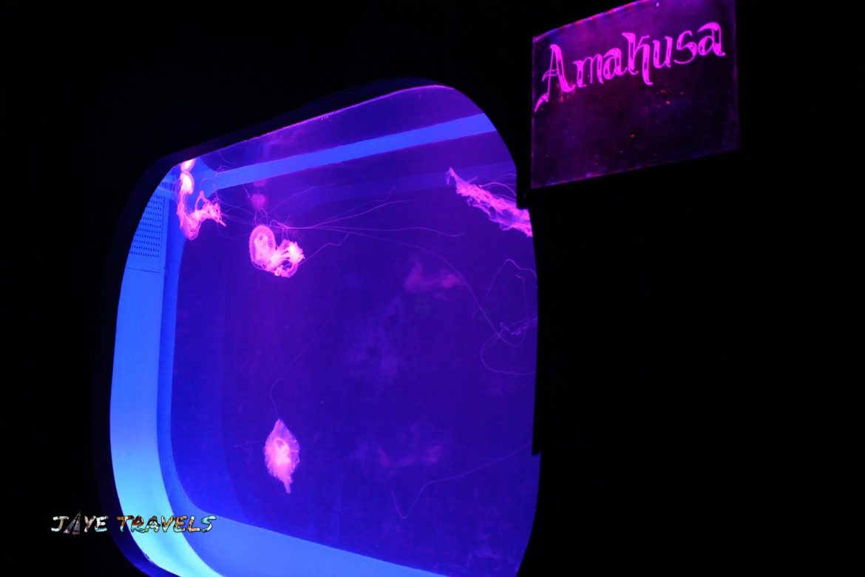 Jellyfish Manila Ocean Park